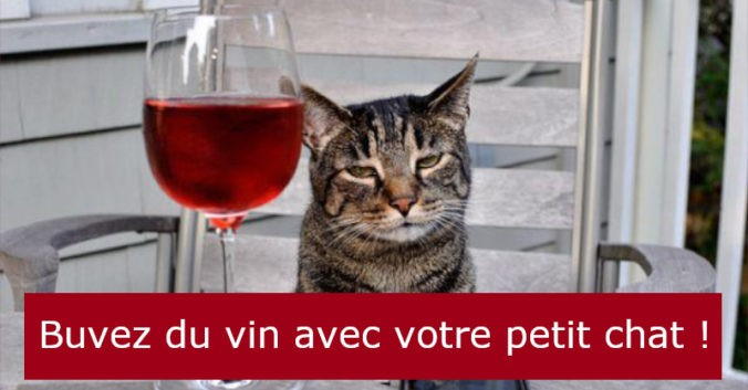 Blog vin Beaux-Vins vins chat oenologie dégustation chats vins