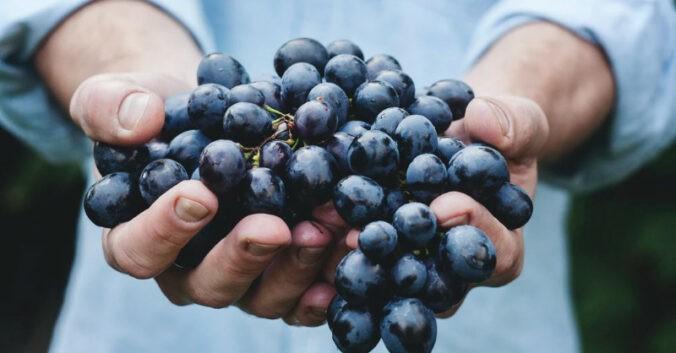 blog vin beaux-vins quest ce quun vin bio