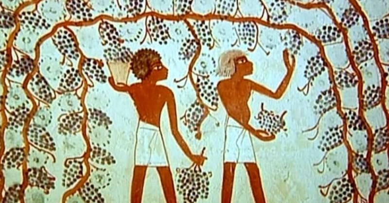 blog vin Beaux-Vins oenologie dégustation vin egypte histoire