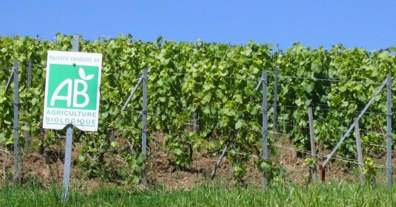 blog vin beaux-vins oenologie dégustation vin vignoble biologique france