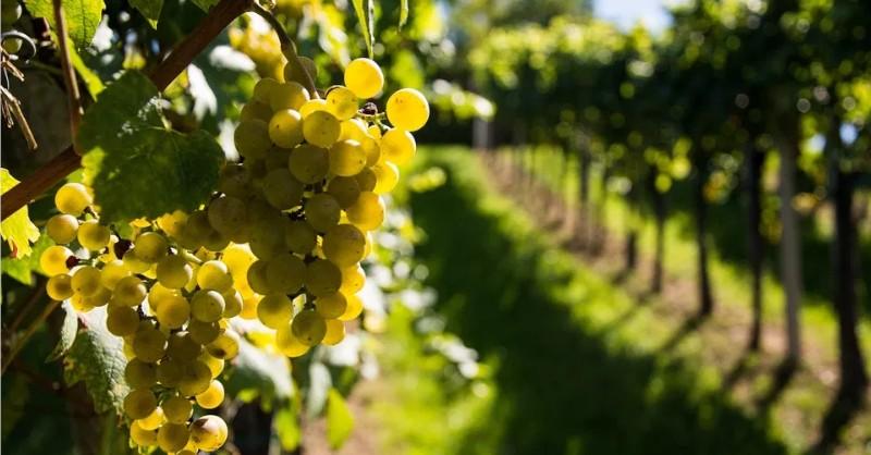blog vin beaux-vins production vin 2016 baisse