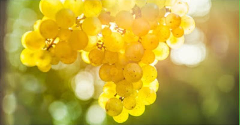 Blog vin Beaux-Vins Riesling Koala urine dégustation oenologie