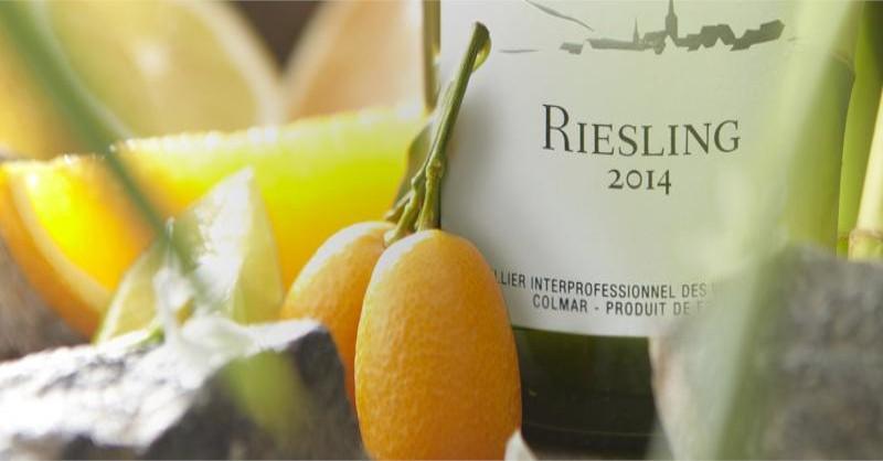 blog vin beaux-vins oenologie dégustation riesling koala