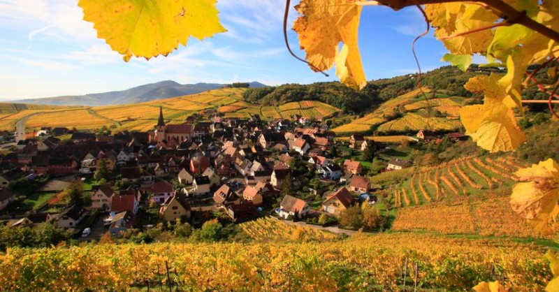 blog vin beaux-vins oenologie dégustation vignoble alsace