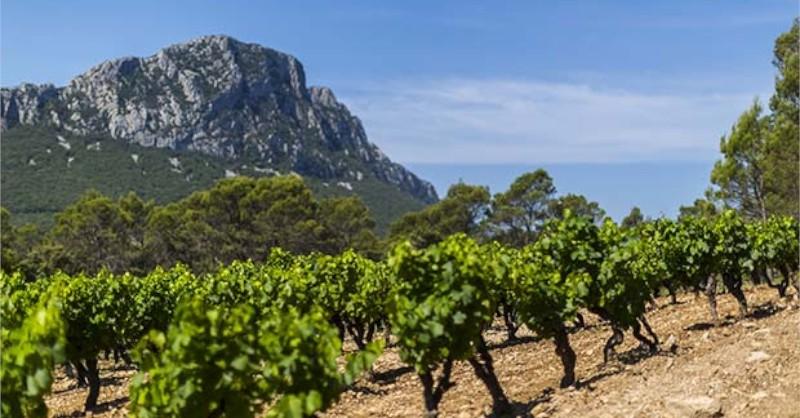 Blog vin Beaux-Vins région viticole Languedoc-Roussillon vigne mer