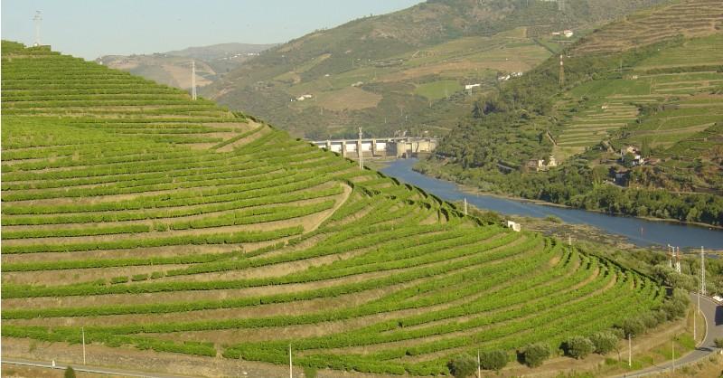 blog vin Beaux-Vins oenologie dégustation vignes douro porto