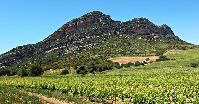 Blog Beaux-Vins vignoble Corse vigne viticulture