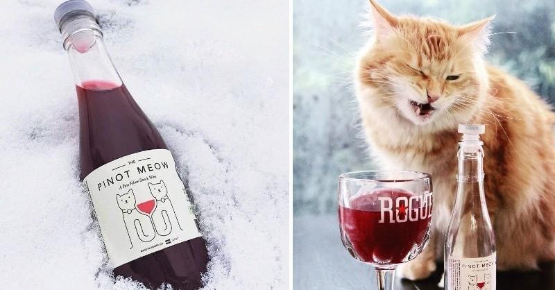 Blog vin Beaux-Vins chat oenologie dégustation chats vins