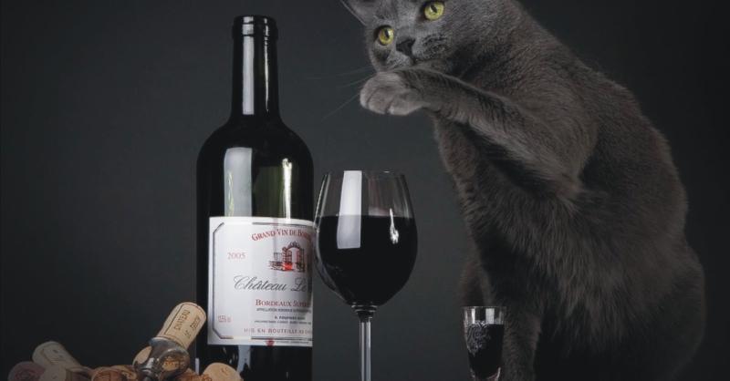 Blog vin Beaux-Vins vins chat oenologie dégustation Nyan Nyan Nouveau