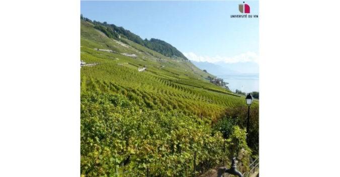 Journee Vins du Monde Universite du vin a Lyon
