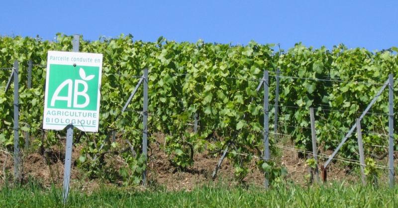 blog vin beaux-vins vigne biologique quest ce quun vin bio