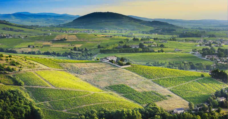 Beaujolais mont vignes