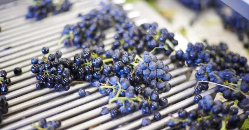 blog vin beaux-vins quizz beaujolais vinification